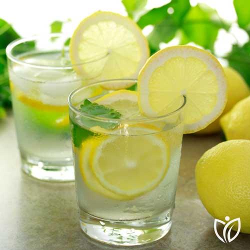 Post Preview leckeres Zitronenwasser