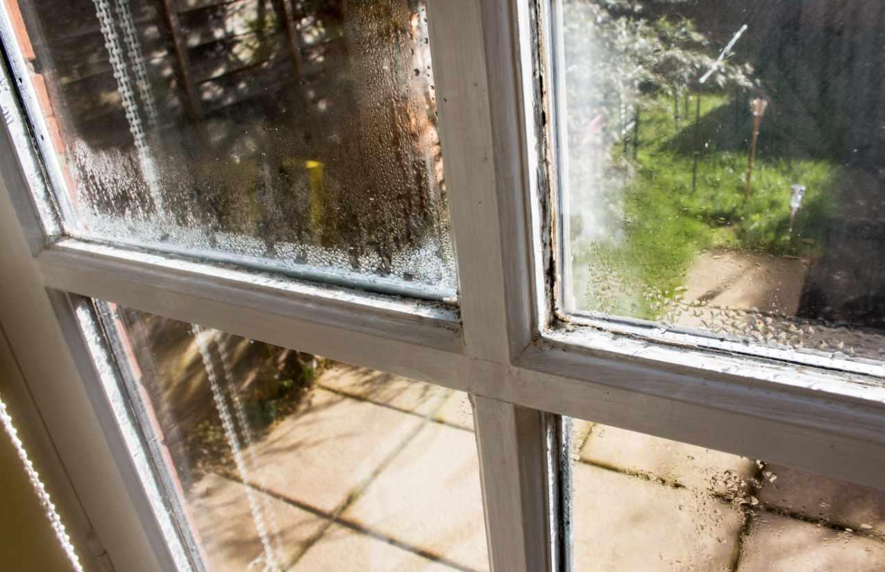 Feuchtigkeit verursacht Schimmel in der Wohnung
