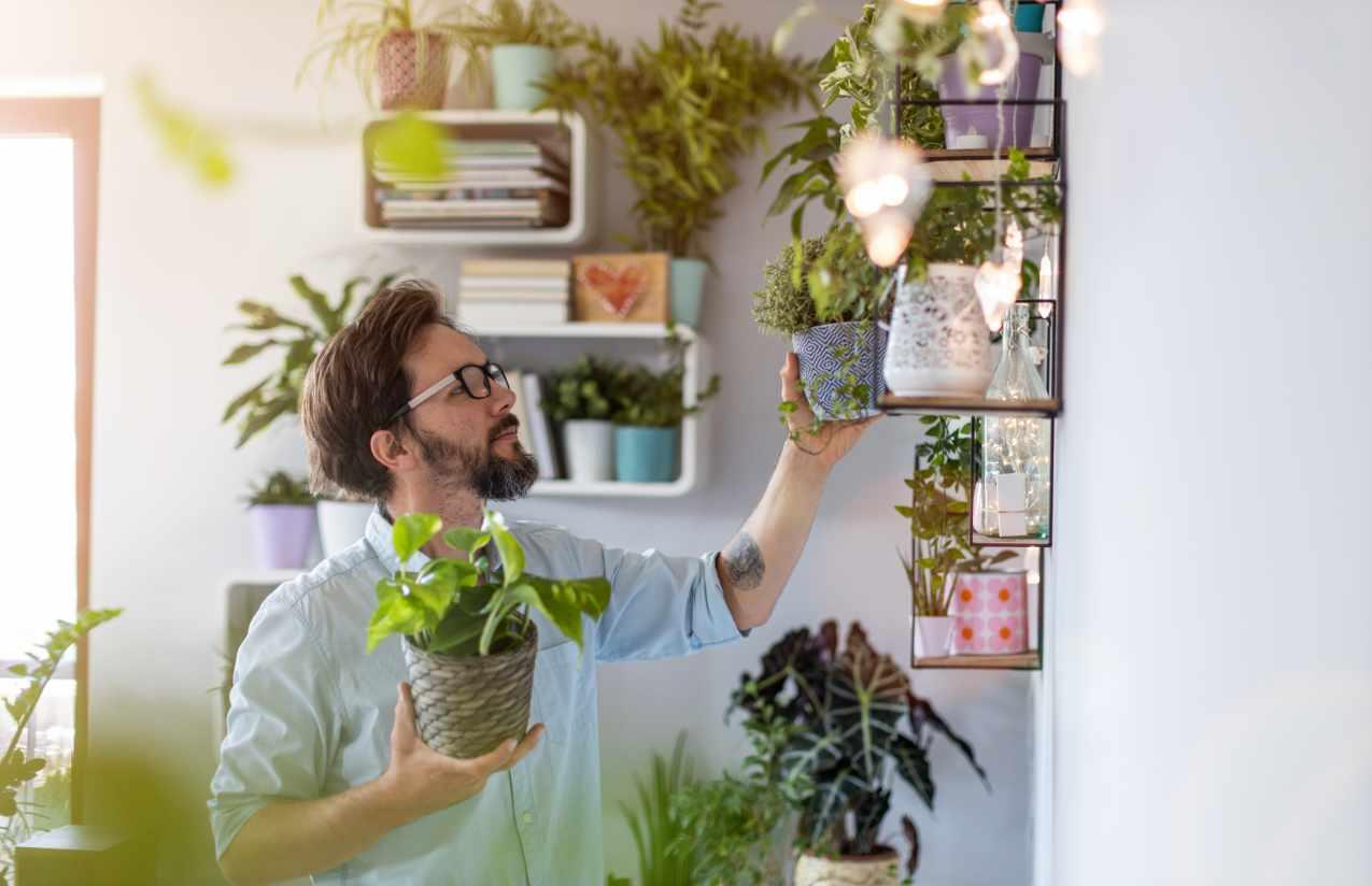 Pflanzen, die die Luft reinigen, benötigen Pflege