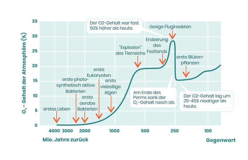 Sauerstoffgehalt im Zeitverlauf