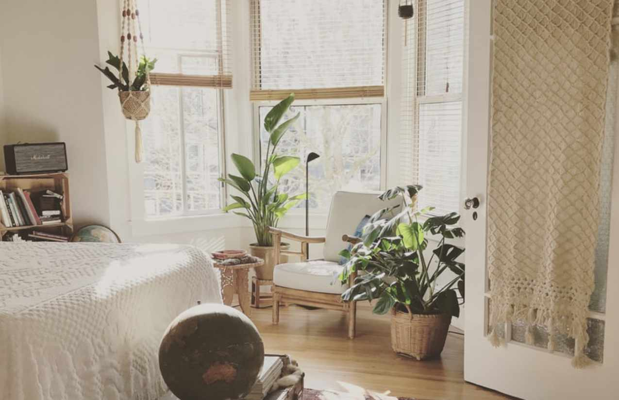 Pflanzen zum Staub vermeiden