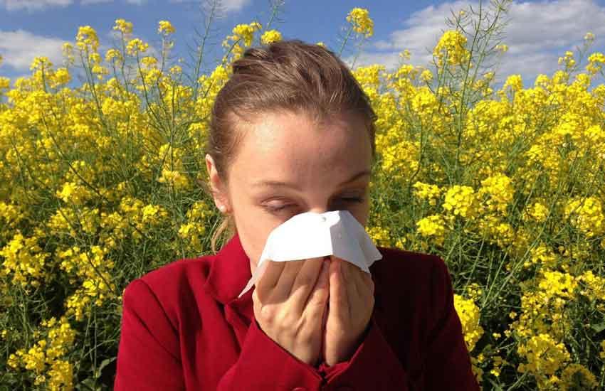 Hoch-Zeit-des-Pollenflugs